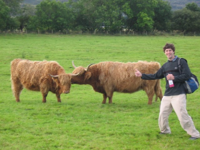 Scotland: Thumbs up to the coos