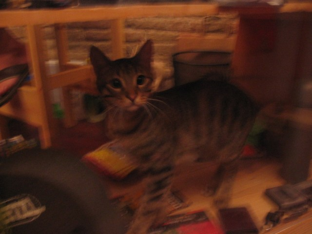 Spain: The cute kitten of the Spanish Trails Company
