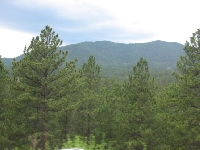 Picture of The Black Hills SD