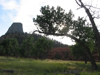 Devils Tower with a Tree